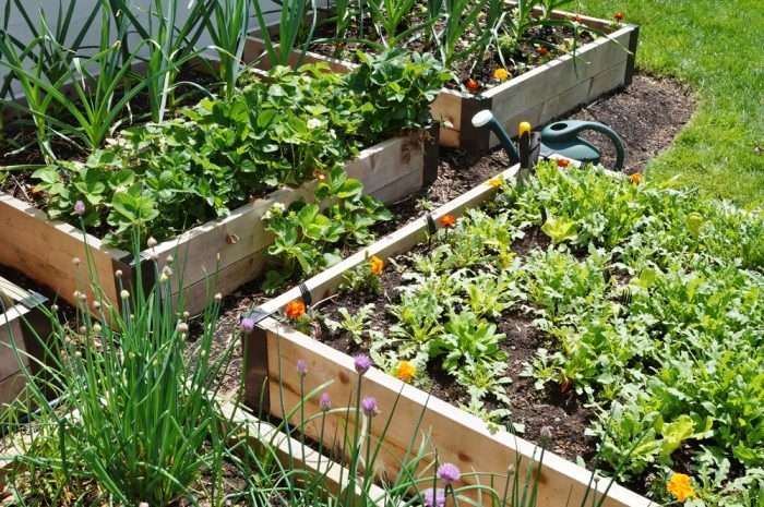 Five raised bed gardens